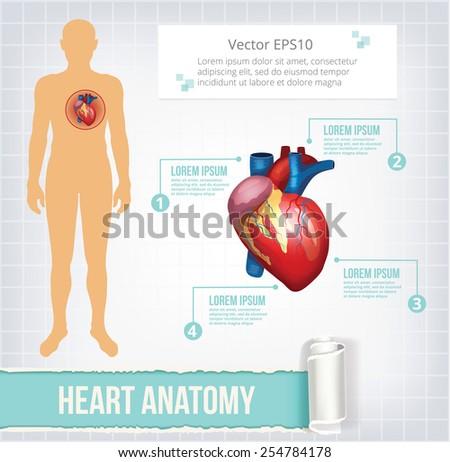 Vector heart infographics banner illustration - stock vector