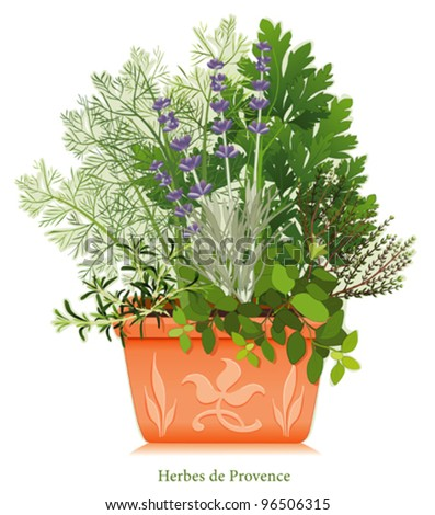 vector - Herbes de Provence Garden. Cooking herb blend of SW France, left-right: Rosemary, Sweet Fennel, Italian Flat Leaf Parsley, Thyme, Oregano, Lavender, clay flowerpot planter, floral design. - stock vector