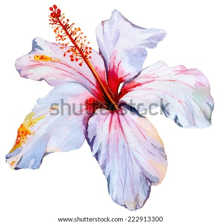 vector hibiscus. single tropical flower. - stock vector