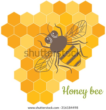 Vector Honey Bee with honeycomb, honey, beeswax. Natural beekeeping products.