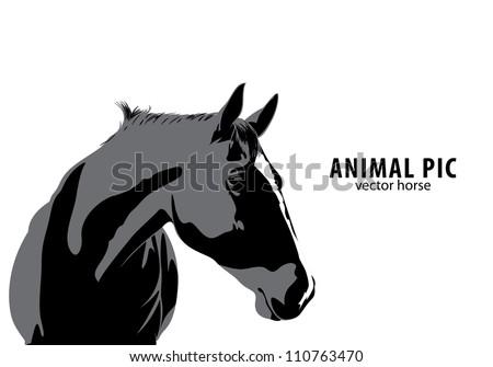 Vector horse on white background - stock vector