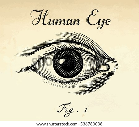 Vector human anatomical eye illustration in vintage etching halftone style.