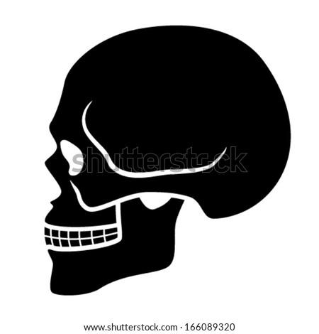 vector human skull symbol - side view - stock vector