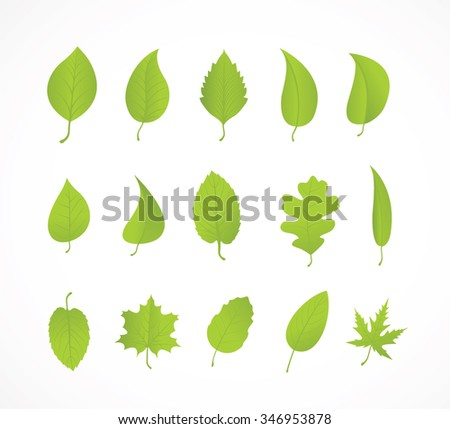 Vector Icons - Green Leaves - Illustration