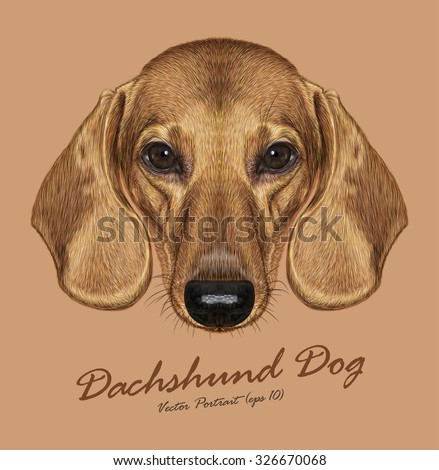 Vector Illustrated Portrait of Dachshund Dog. Cute short haired red dachshund. - stock vector