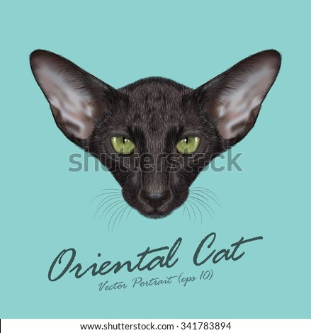 Vector Illustrated Portrait of Oriental Short-hair Cat. Cute face of Domestic purebreed black cat on blue background - stock vector