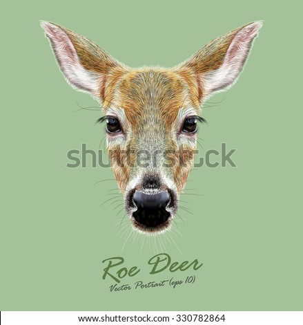 Vector Illustrated Portrait of Roe Deer on green background. Cute face of a Deer (Roe & Doe). It is Deer of Eurasia and America. - stock vector