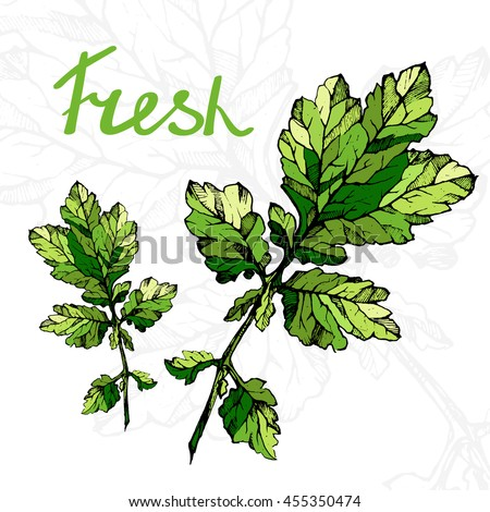 Vector illustratio of green twig. High detailed illustration