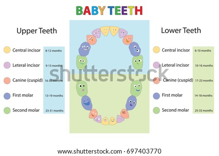 Primary Teeth Stock Images, Royalty-Free Images & Vectors