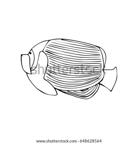 Vector Illustration Black Line Angel Fish On White Background