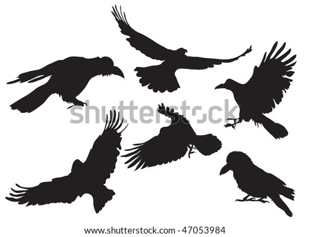 Vector illustration collection of crow silhouette in different flight positions - stock vector