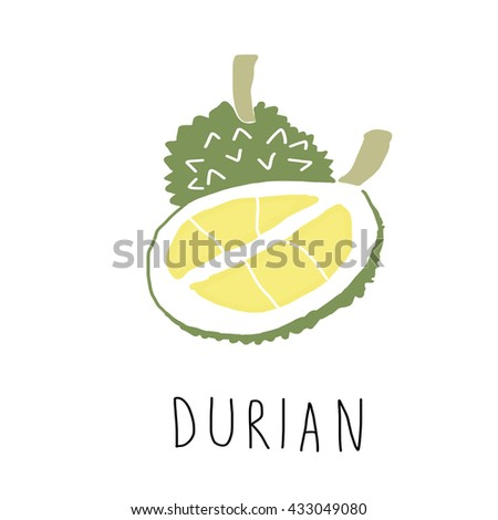 vector illustration- durian and durian flesh isolated on white background.