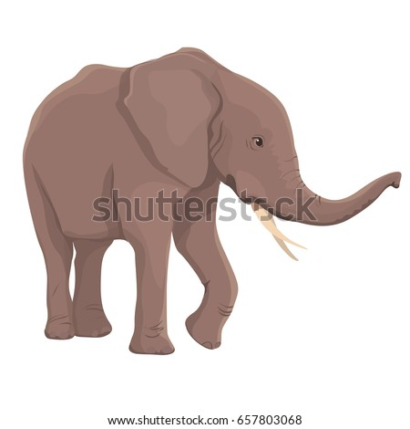 Vector Illustration Elephant Isolated