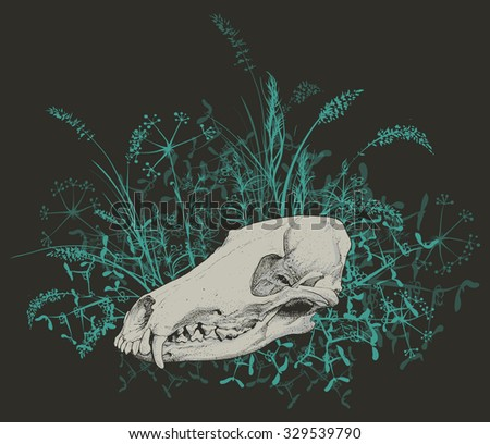 Vector illustration. Hand drawing of a skull of a predator among green grasses on a dark background. - stock vector