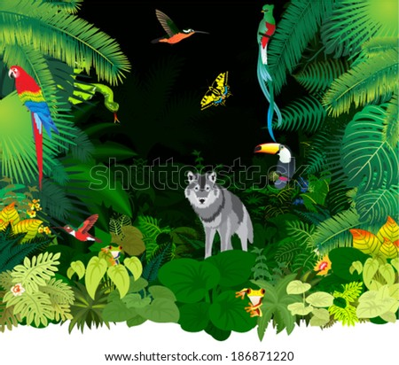 Vector Illustration Jungle Rainforest with Frog, Toucan, quetzal, humming-birds, Ara and wolf - stock vector