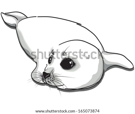 Vector illustration of a baby seal isolated on white