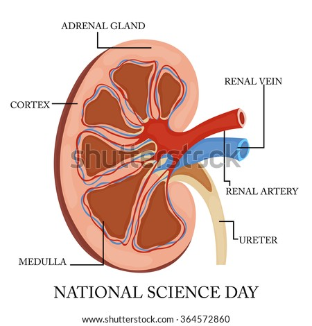 Vector illustration of a background for National Science Day.