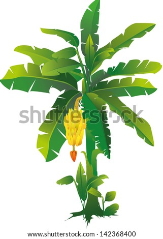 Vector Illustration Of A Banana Tree