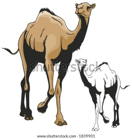 Vector illustration of a camel. - stock vector