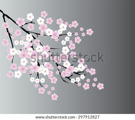 vector illustration of a cherry blossom background
