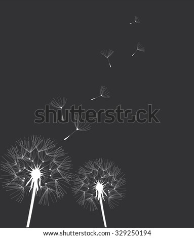 vector illustration of a dandelion flower - stock vector
