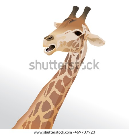 Vector illustration of a giraffe head portrait isolated on white background.