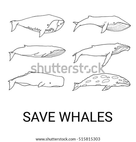 bowhead whale stock photos royalty free images vectors shutterstock. Black Bedroom Furniture Sets. Home Design Ideas