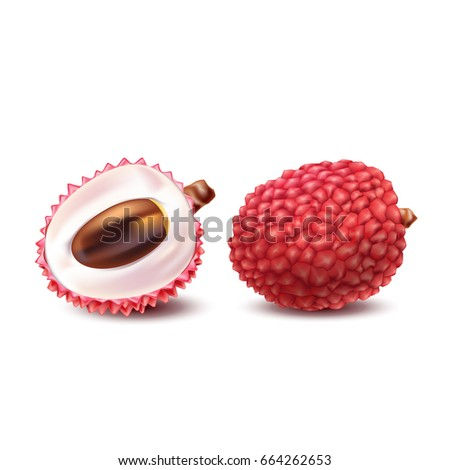 Vector illustration of a realistic style of litchy whole fruit and a cut litchi isolated on white. Print, template, design element for packaging with exotic fruit