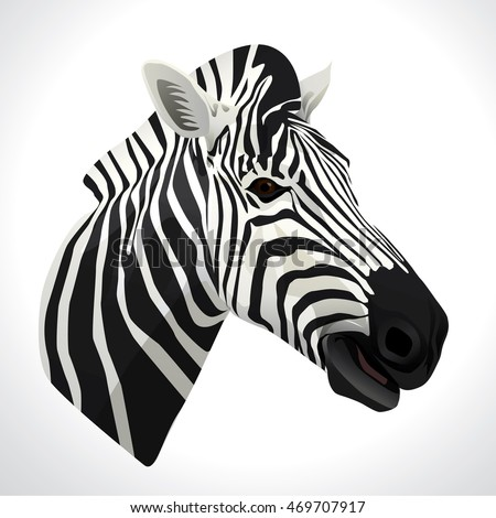 Vector illustration of a zebra head portrait isolated on white background.