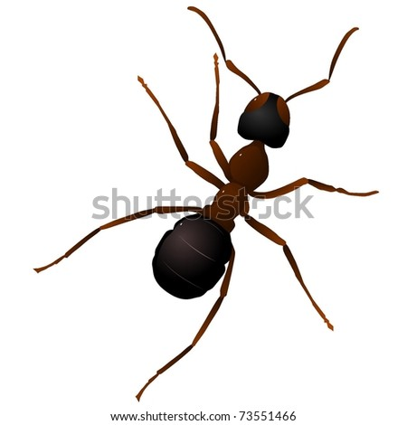 vector illustration of an ant.