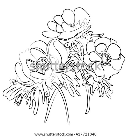 Vector illustration of an ink sketch of a flower anemones - stock vector