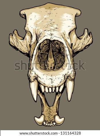 Grizzly Bear Skull Tattoo