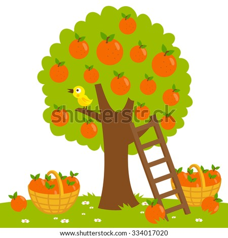 Vector Illustration of an orange tree, a ladder and a basket with harvested fruit.   - stock vector