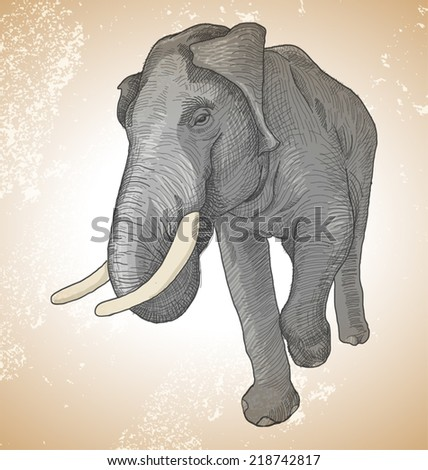Vector illustration of   asian elephant