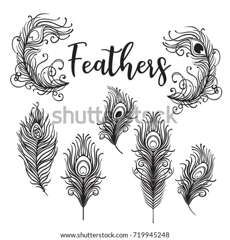 Peacock stock images royalty free images vectors for Peacock tattoo black and white