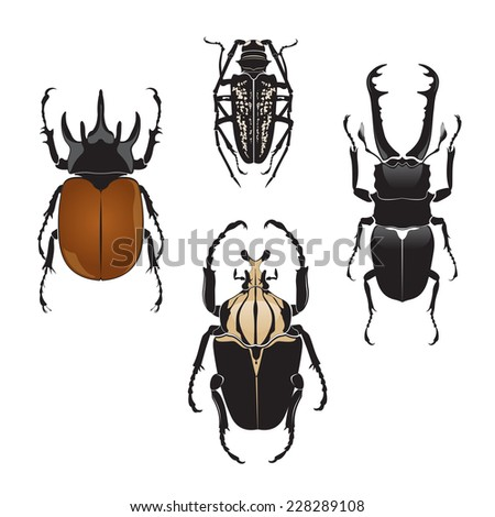 Vector illustration of beetles  - stock vector