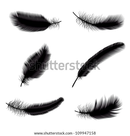 Vector illustration of black feathers - stock vector