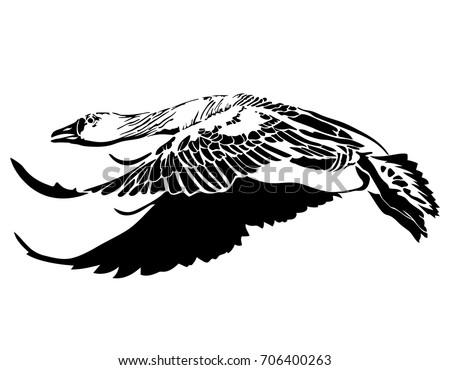 vector illustration of black silhouette flying goose on white background element for design