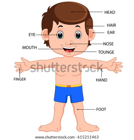Vector illustration boy body parts diagram stock vector 615211463 vector illustration of boy body parts diagram poster ccuart Images
