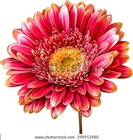 Vector illustration of bright red pink Dahlia flower. Spring flower.Isolated on white background - stock vector