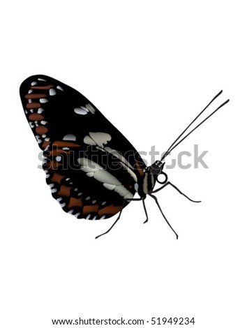 Vector illustration of  butterfly found in  Ecuador. Raster image also available. - stock vector
