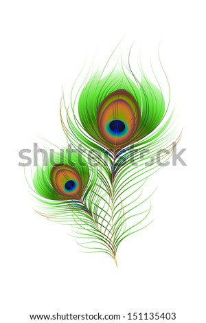 vector illustration of Colorful Peacock Feather against white