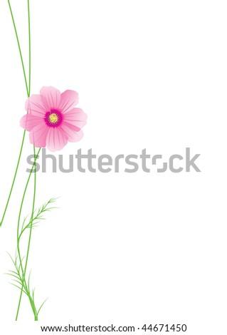 vector illustration of cosmos flower - stock vector