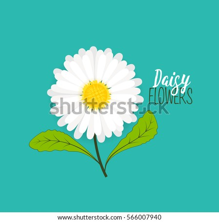 Vector illustration of daisie, meadow floral background