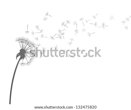 Vector Illustration of Dandelion - stock vector