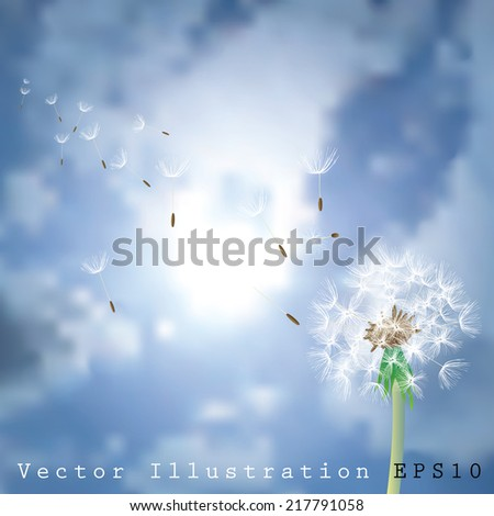 vector illustration of dandelion with flying seeds - stock vector