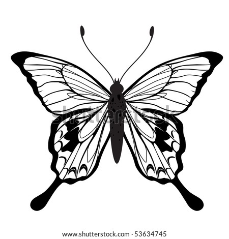 Vector Illustration of detailed butterfly silhouette. - stock vector