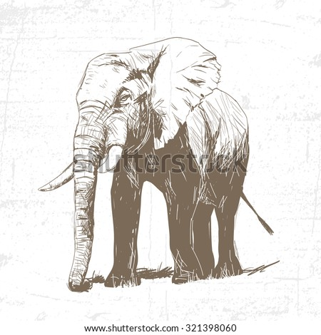 vector illustration of engraving elephant on white background - stock vector
