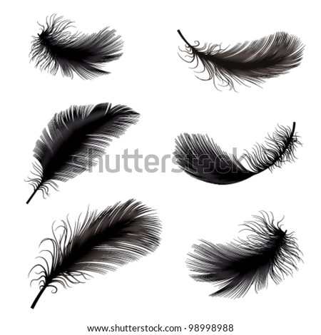 vector illustration of feather - stock vector