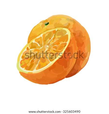 Vector illustration of fresh orange - stock vector